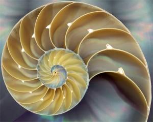 02 - Nautilus Shell