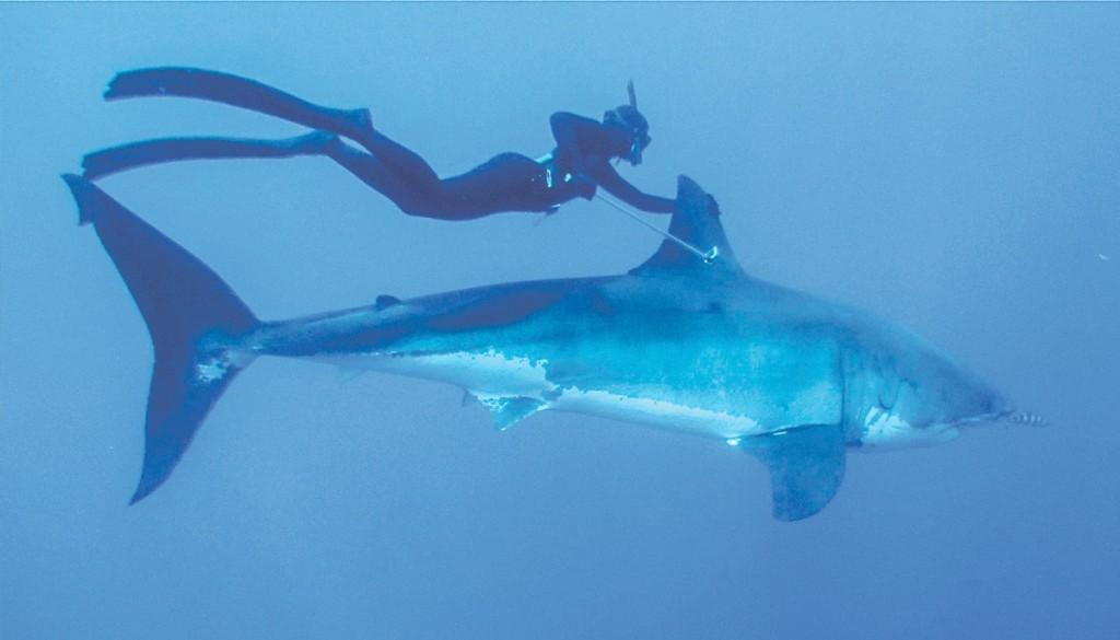 kimi werner shark